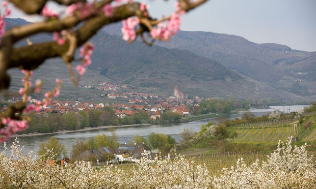 �sterreich, Nieder�sterreich, Wachau, Pfirsichbl�te