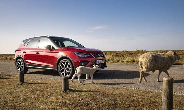 Lammfromm geben sich CNG-Autos im täglichen Umgang, das will Seat unter dem Kürzel TGI nun in die Welt tragen.