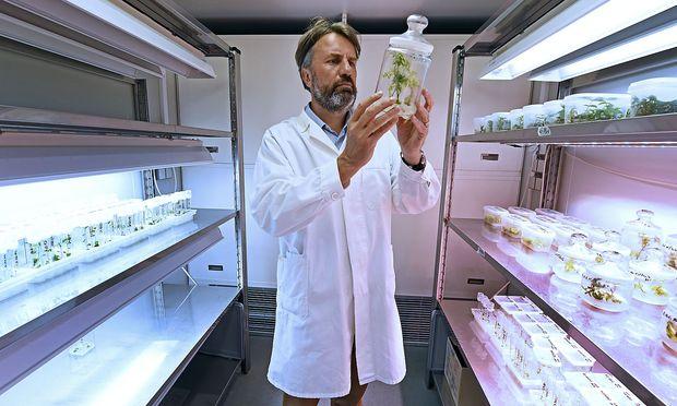 Berhard Föger, Leiter des Instituts für Nachhaltige Pflanzenproduktion der Agentur für Gesundheit und Ernährungssicherheit