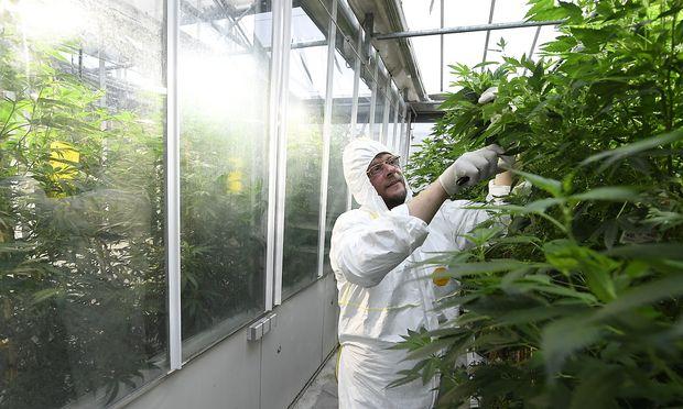 Ein Mitarbeiter des Instituts für Nachhaltige Pflanzenproduktion