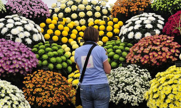 Visitor views floral displays at the annual Hampton COurt Flower Show in Hampton near London