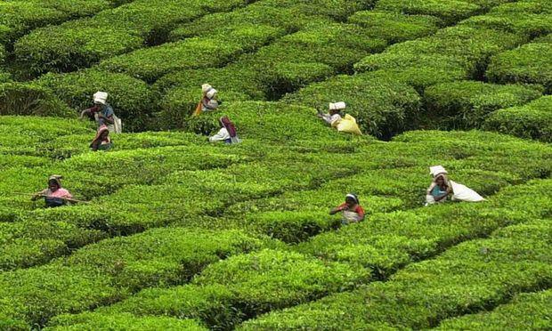 Indien Geheimnisse Keralas
