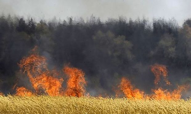 FILE -  In this Saturday, July 31, 2010, file photo a field of unidentified cereals burning near the