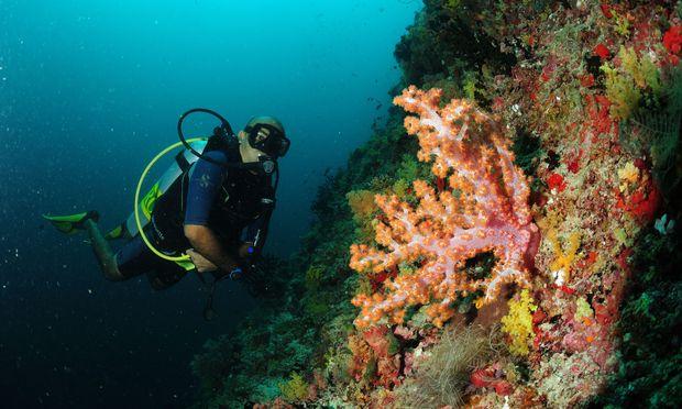 Wesen und Formationen wie nicht von dieser Welt: Korallen sind sehr sensible Wesen und reagieren auf negative Umwelteinflüsse.
