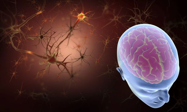 Menschliches Gehirn und Neuronen