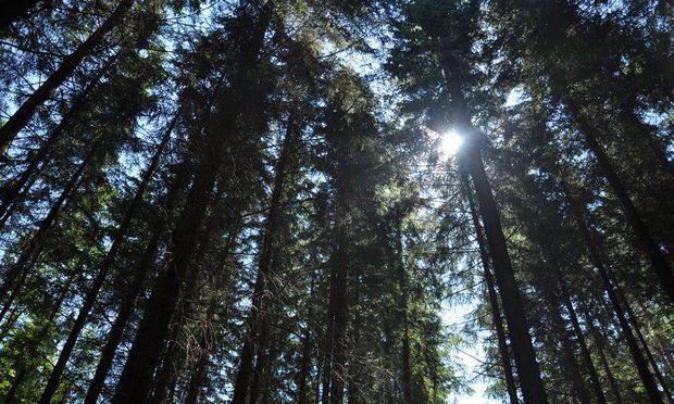 Die Natur macht vor, wie es geht: Sie verwandelt Kohlendioxid mit Hilfe von Sonnenlicht in energiereiche Biomoleküle wie Holz.