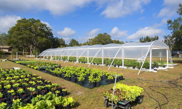 Anbau und Verkauf von Bio Salat in Toepfen USA Florida sale of organic lettuce in pots USA Flori