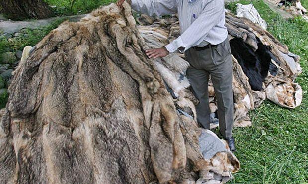 Die Verdächtigen sollen versucht haben, mit ihren Aktionen Firmen zum Ausstieg aus dem Handel mit Pelzen zu zwingen.