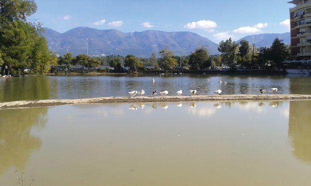 Zumindest 13  Enten: Sind das alle Zootiere?