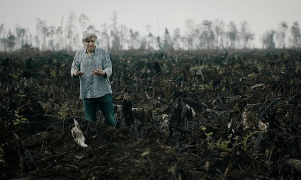 Für Palmölplantagen wird Regenwald abgefackelt: Werner Boote am Tatort in Indonesien.