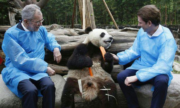 ++ HANDOUT ++ STAATSBESUCH IN CHINA: BESUCH DES DU JIANGYAN PANDA PARKS: VAN DER BELLEN / KURZ