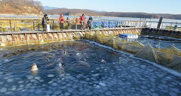 Eine der Anlagen für die Wale an der Küste des Ochotskischen Meeres.