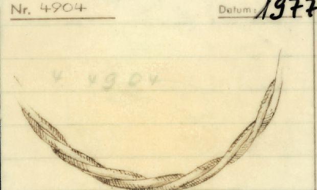 1977. Diese Zeichnung aus dem Musterbuch ist 40 Jahre alt.
