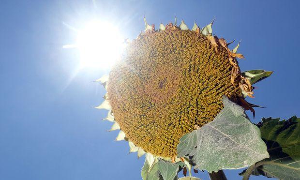 Bauernverband will eine Milliarde Euro Hilfe wegen Ernteausfällen