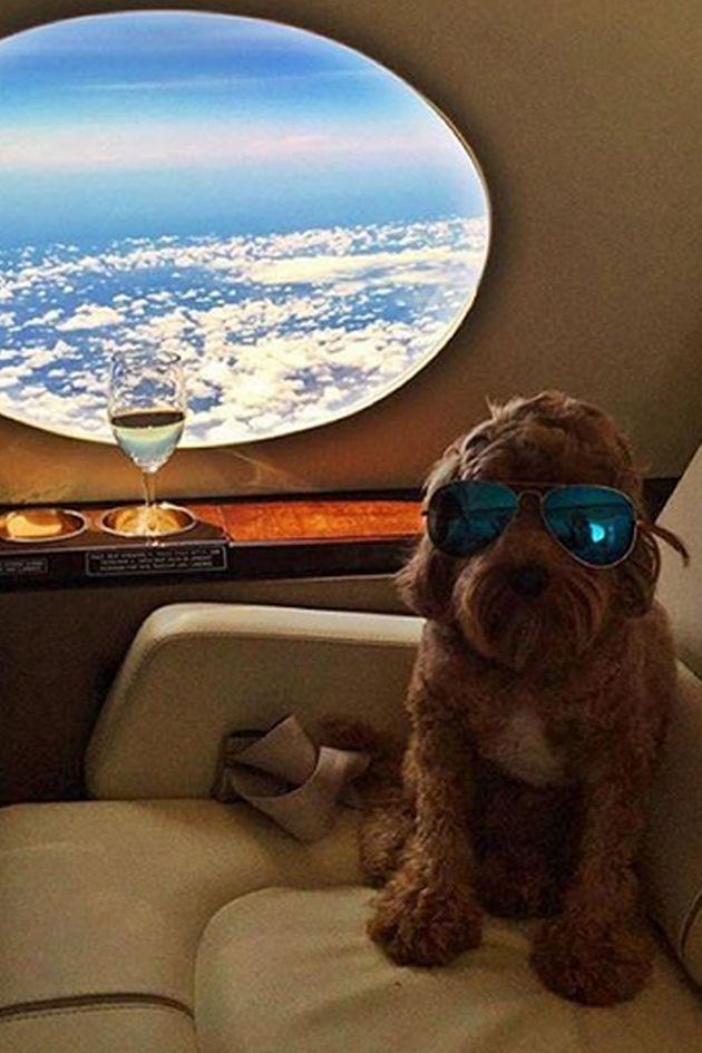 (c) Instagram/richdogsofig