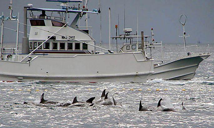 Ein Walfangschiff in der Bucht von Taiji