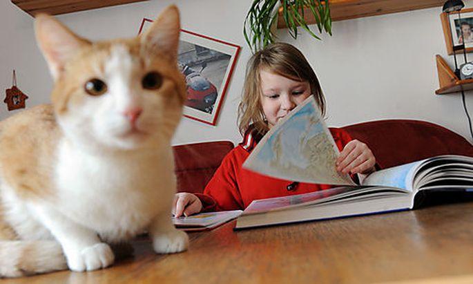 Homeschooling, Unterricht daheim, Schule, Lernen, Unterricht Foto: Clemens Fabry