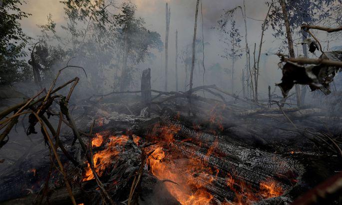 Verheerende Feuer in Brasilien