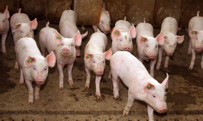 """Die Zahl der in der Tiermedizin zugelassenen Antibiotika soll auf ein """"absolutes Minimum"""" reduziert werden."""