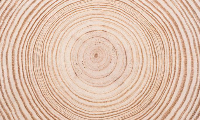 Querschnitt eines Baumstamms mit sichtbaren Jahresringen