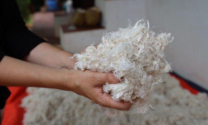 Als Alternative zu Tierwolle gibt es einige Naturfasern, hier wird etwa die Pflanze Calotropis verwendet.