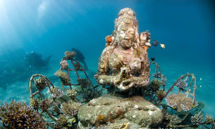 Wo früher Speisefische mit Dynamit gejagt wurden, gingen ganze Korallenriffe zugrunde. Seit Jahren siedeln hier ein Architekt und Naturschützer lebende Korallen auf Stahlgerüsten an.