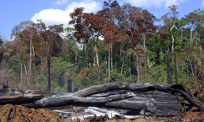 Brandrodung im Amazonas Regenwald Brasilien Amazonasgebiet slash and burn cultivation in the Amaz