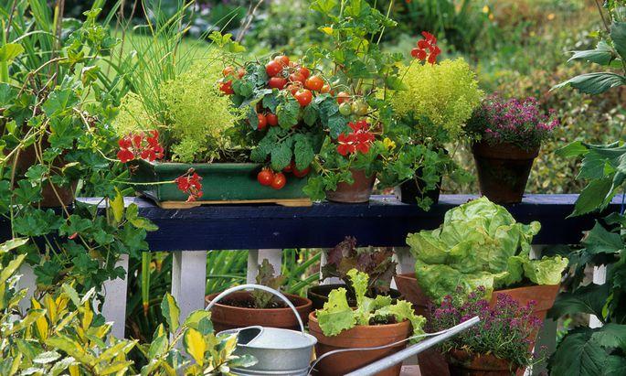 Braucht nicht viel Platz: Grüne Oase mit Ernte-Faktor.