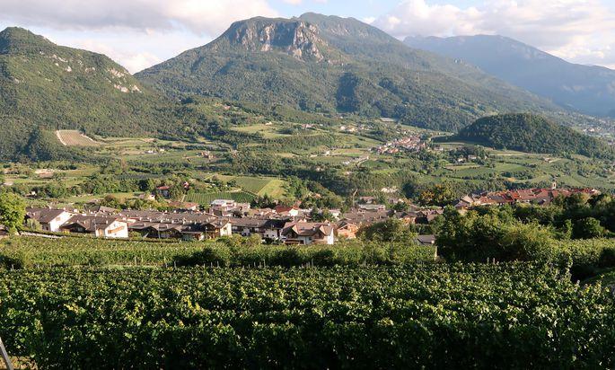 Blick über die Weinanbaugebiete im Trentino