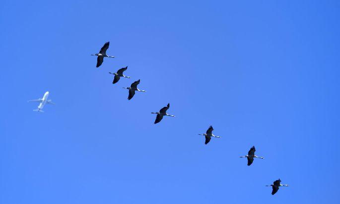 Vogelschlag gilt als außergewöhnlicher Umstand.