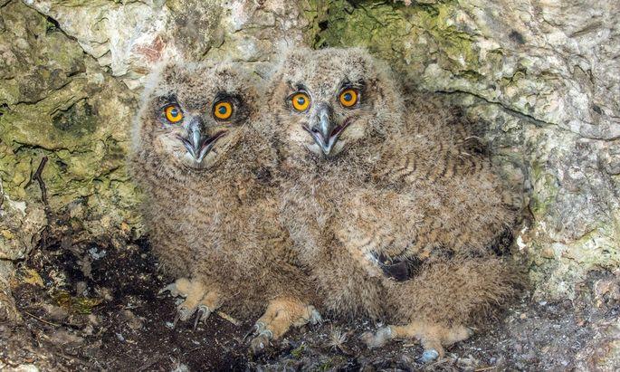 Unter Artenschutz stehen auch wild lebende Vogelarten. Ein theoretisches Risiko für Wald- und sogar Gartenbesitzer.