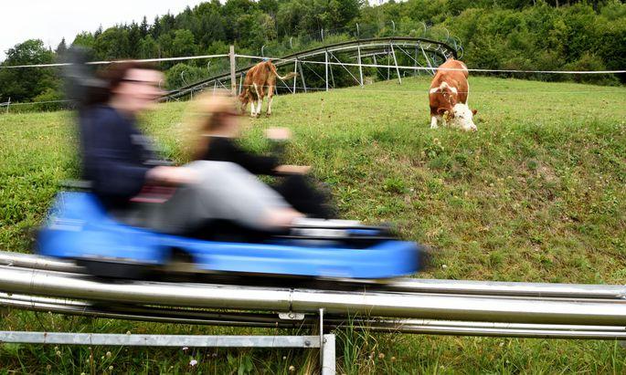 Es kann schon ganz schön schnell werden: Mit der blitzblauen Rodel geht es in Türnitz im Mostviertel ins Tal.