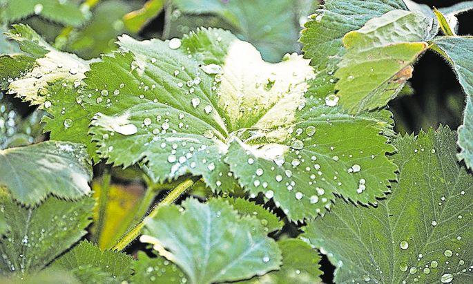 Dem Regen voraus geht die einzigartige Phase des Regenduftes.