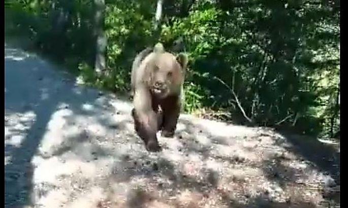 Symbolbild: Bärenvorfall am vergangenen Wochenende