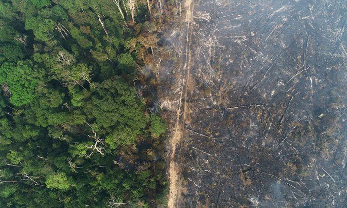 Anbaufläche statt Urwald. Der Amazonas ist stark von Rodungen betroffen.