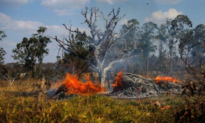 Auch in Naturschutzgebieten und indigenen Ländereien brechen immer wieder Feuer aus