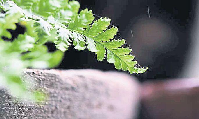 Hypertufa für den eigenen Garten kann man recht einfach selbst herstellen.