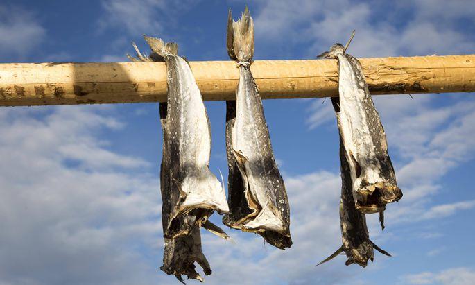 Symbolbild Stockfisch.