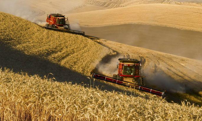 Zu viele Agrar-Subventionen begünstigen Großbetriebe und schaden der Umwelt, kritisiert die OECD.