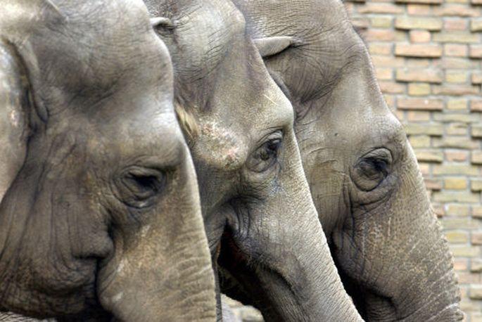 Zeit für drei Aktien, stark wie Elefanten.