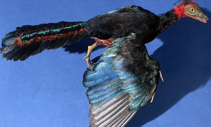 So könnte er ausgesehen haben, der Archaeopteryx.