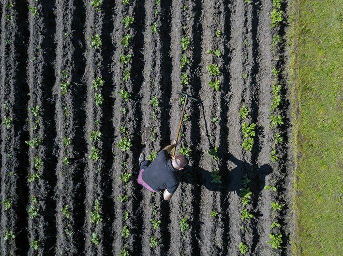 Tierische Reststoffe können dank eines neuen Verfahrens in wertvolle Materialien wie Düngemittel für die Landwirtschaft umgewandelt werden.