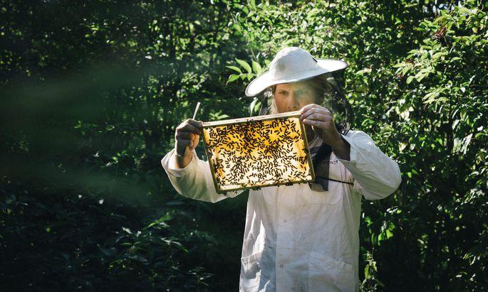 Bis 2028 soll die Bienenpopulation in Österreich und Deutschland um zehn Prozent erhöht werden.