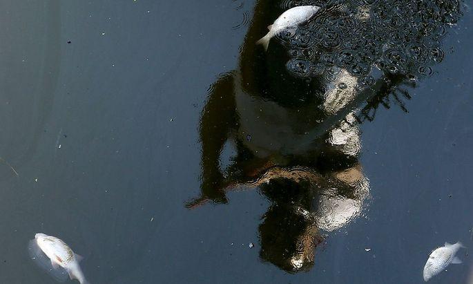 Massives Fischsterben im tyrrhenischen Meer.