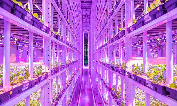 Vollautomatischer Pflanzenanbau in Regalen ist ressourcenschonend und wetterfest.