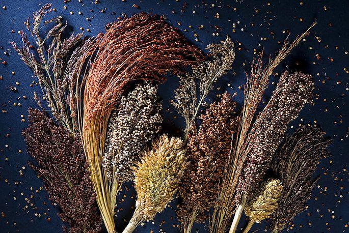 Sorghum gilt als wichtigstes Getreide Afrikas und ist auch in trockenen Gegenden in Zentralamerika und Südasien ein wichtiges Grundnahrungsmittel.