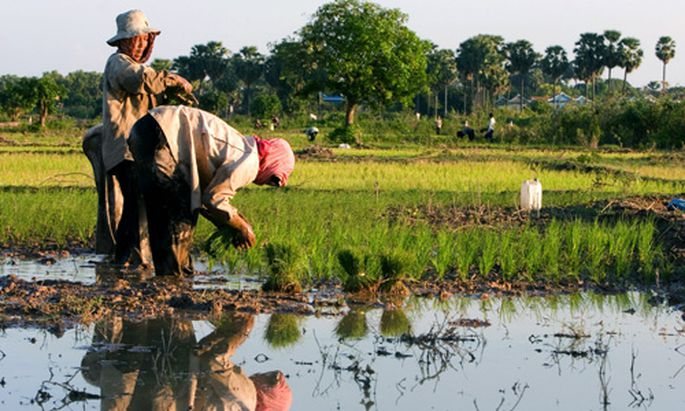 Kambodscha grosse Landraub