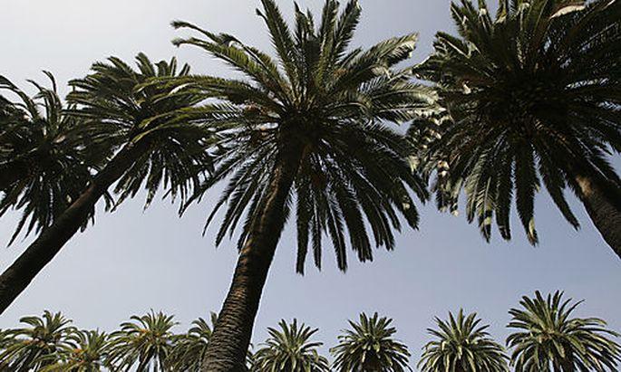 Kalifornien begibt Anleihen