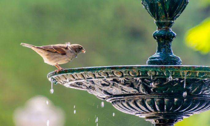Selten gewordenes Garten-Element: Das Vogelbad. Im Bild eine besonders prächtige Variante, es tut aber auch ein einfacher Blumentopfuntersetzer.
