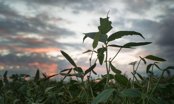 Monsantos Unkrautvernichter löste eine Prozesslawine aus.
